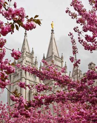 ee2f9261da83 Salt Lake Temple Blossoms (8x10 Print) - Deseret Book