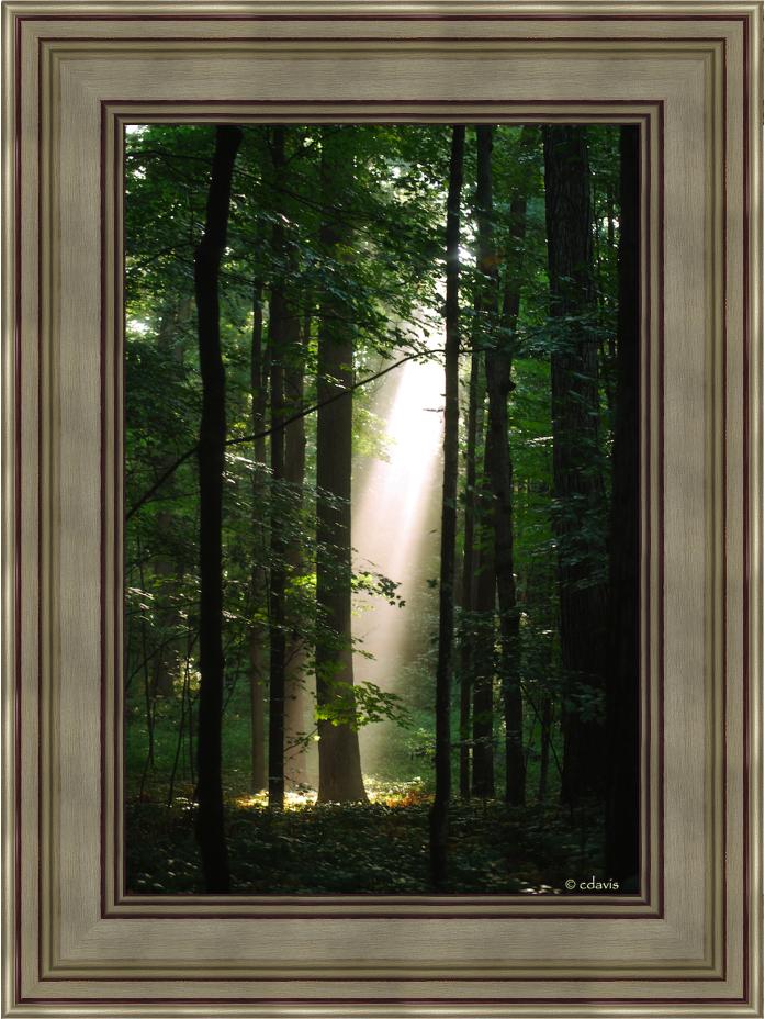 Sacred Grove 19x25 Framed Art